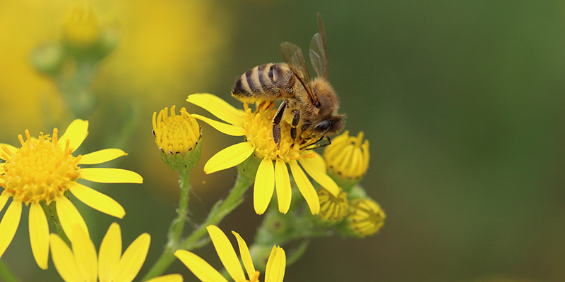 Пчела на цветке, фото