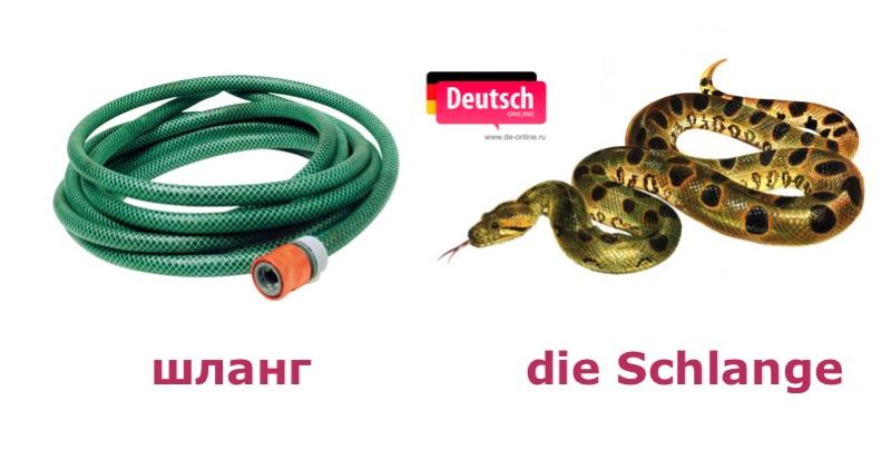 Змея - die Schlange