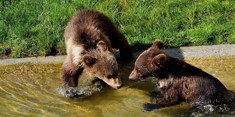 Медвежата в Берне, фото