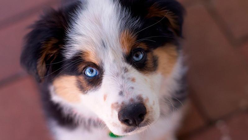 Собака, фото